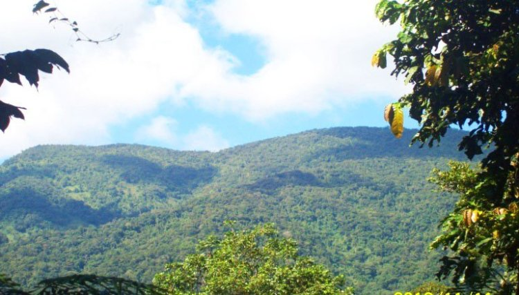 Forests cover of Maducayan, Natonin