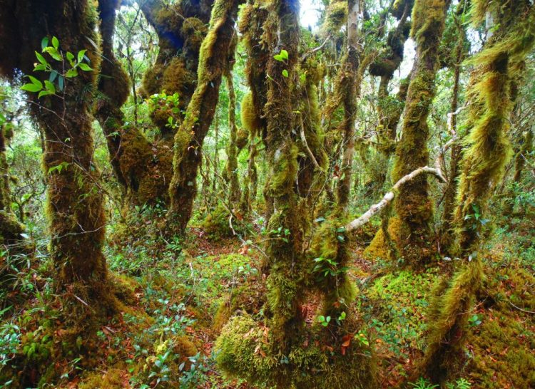 Sayang Mossy Forest is one of the hidden tourist destinations in the Philippines