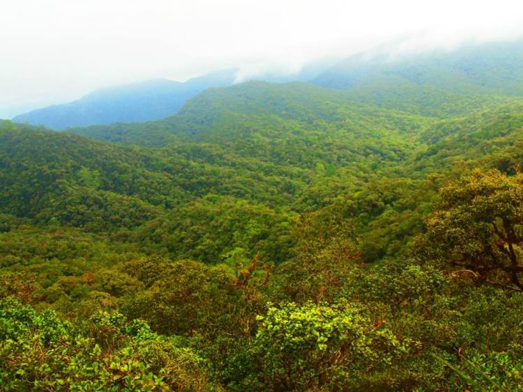 A bird's eye view of Sayang Mossy Forest Philippines in Barlig, Mountain Province