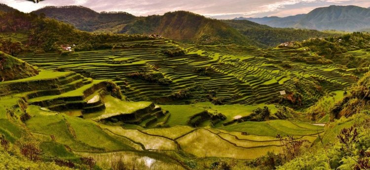 Maligcong Rice Terraces is one of the best rice terraces of the Philippine Cordilleras