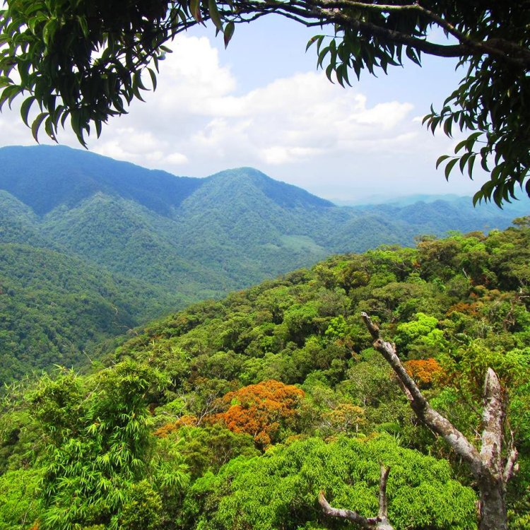 Calanasan forest is one of the best Apayao tourist spots