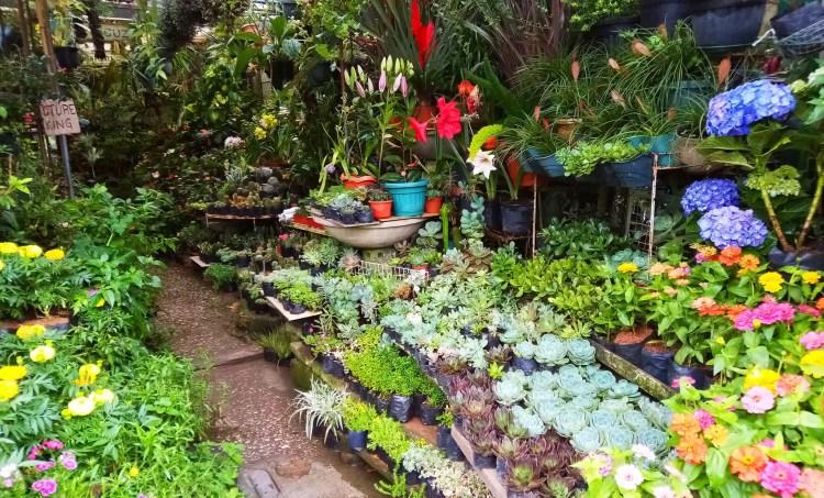 Another shot of an orchidarium in Burnham Park.