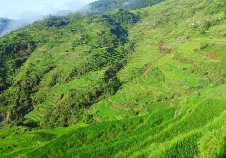 Sadanga Rice Terraces is one of the best rice terraces of the Philippine Cordilleras