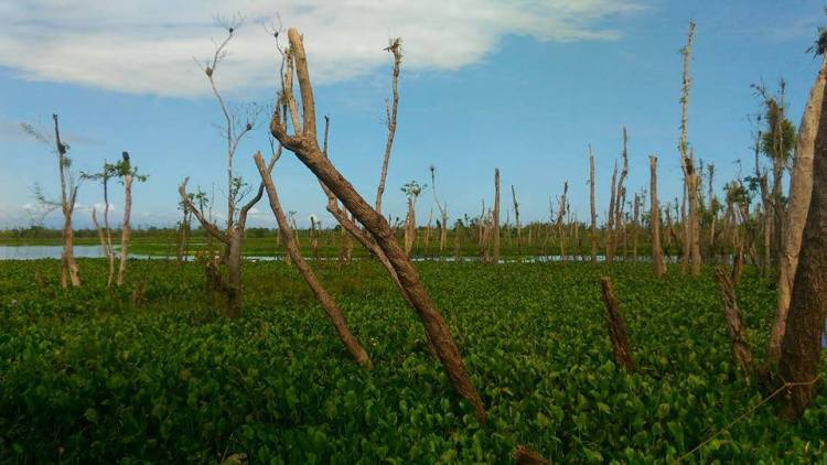 Agusan Marsh is one of the tourist spots in Agusan del Sur