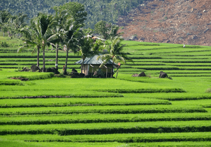 Lico Rice Terraces is one of Biliran tourist spots