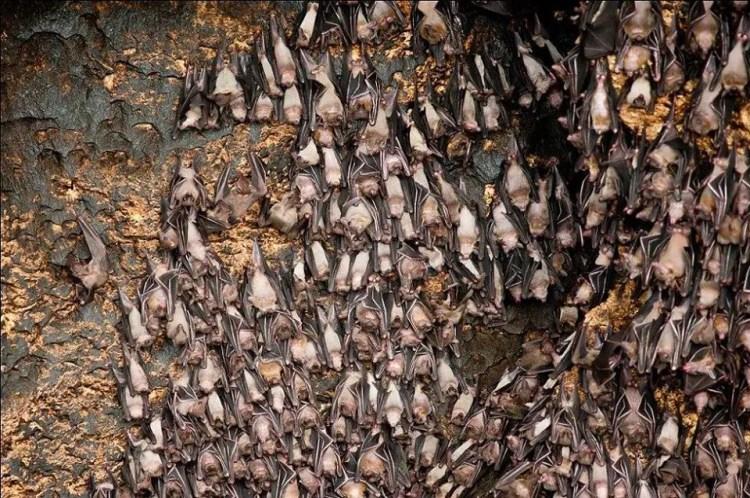 Monfort Bat Cave is one of Davao Del Norte tourist spots