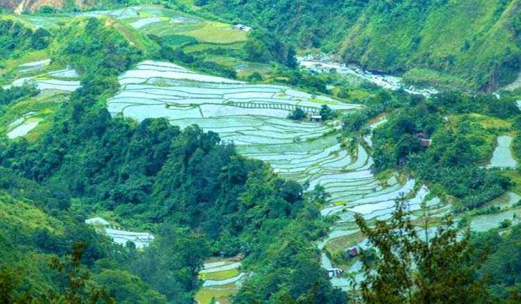 Naguey Rice Terraces is one of the best tourist spots in Atok, Benguet