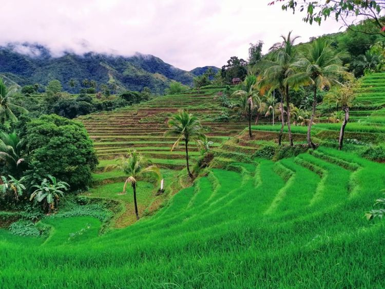 Antique Rice Terrraces is one of the best Antique tourist spot