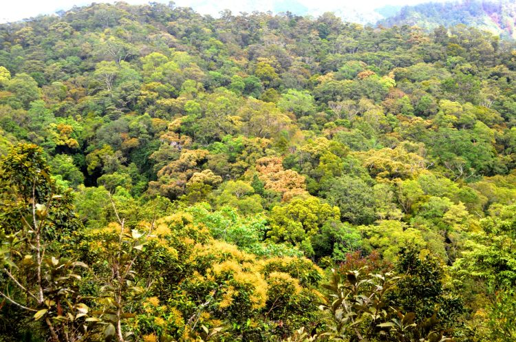 The Barlig road project threatens this forest
