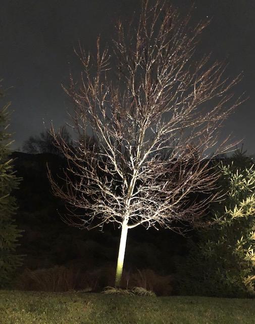 An ice tree
