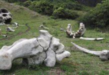 Kualoa Ranch Jurassic Park Tour