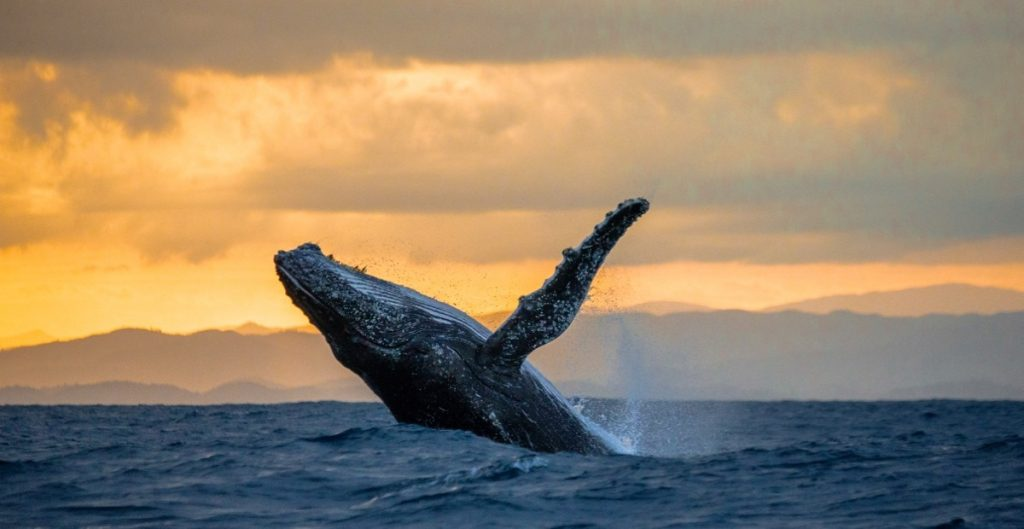 Whale Watching Tour in Hawaii