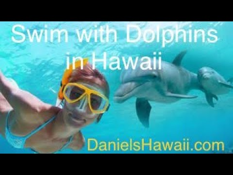 Dolphin Swim Hawaii - Things to do Oahu TODAY!