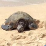 Explore Turtle Beach