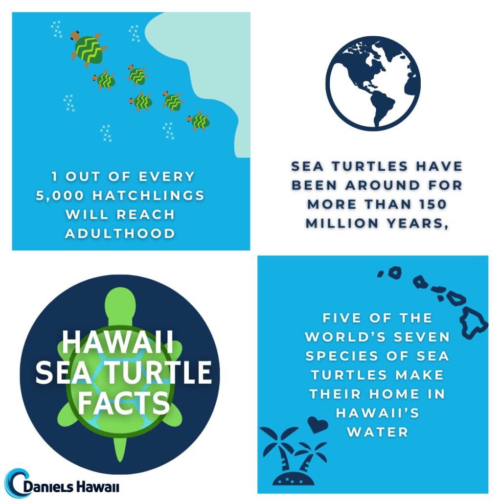 Hawaii Sea Turtle Facts