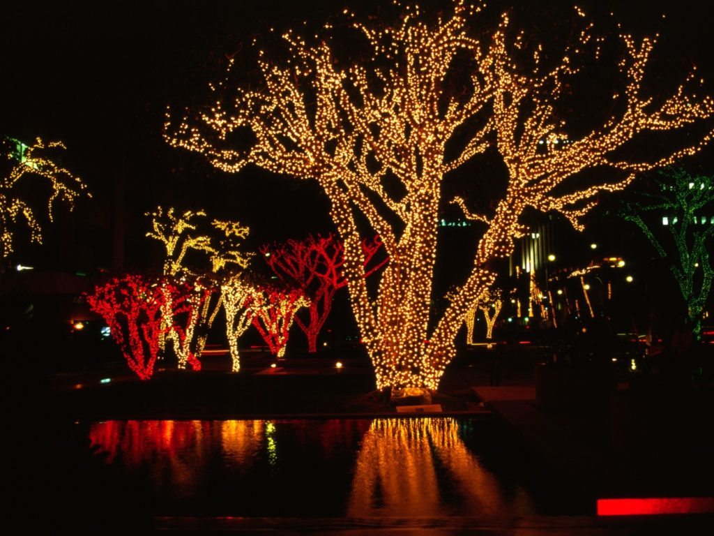 Decorated banyan trees for light up the night.