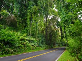 The road to Hana is a well known road in Maui