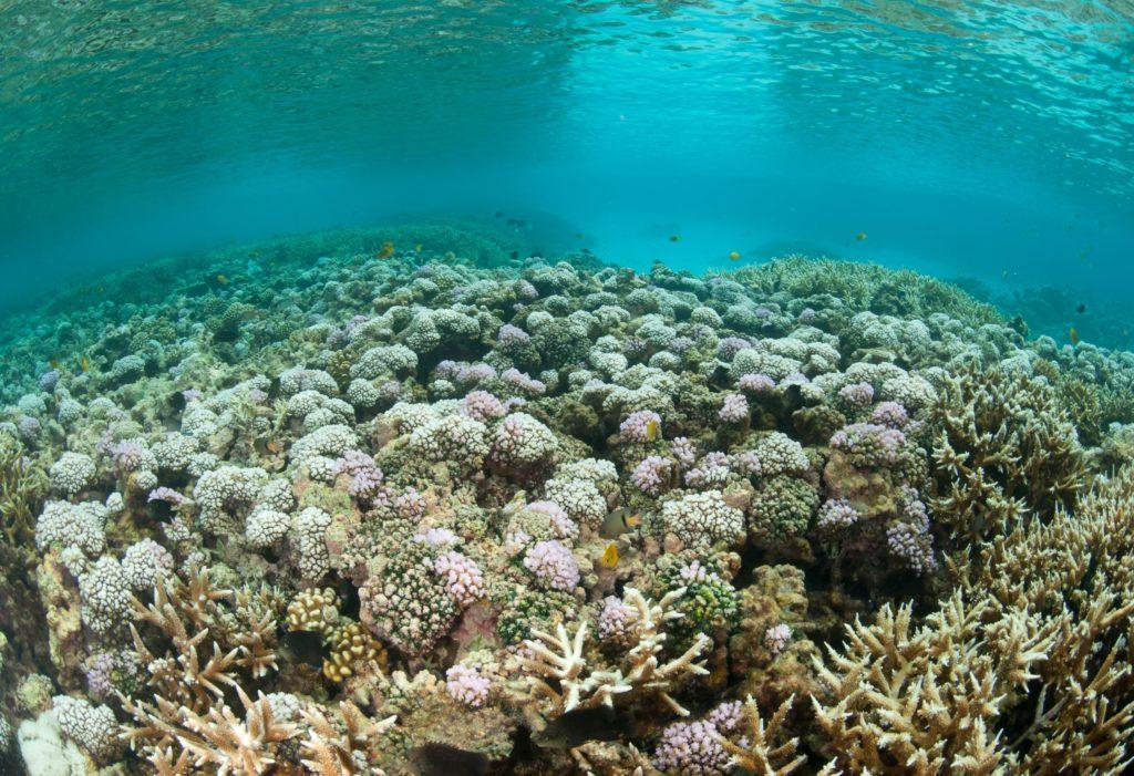Bleached reefs die and no longer provide a flourishing habitat.