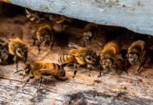 Bee Farm on the Big Island