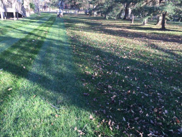 professional lawn mowing daniels