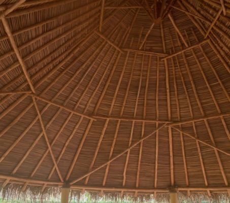 Buena Vibra Collective - Nosara, Costa Rica