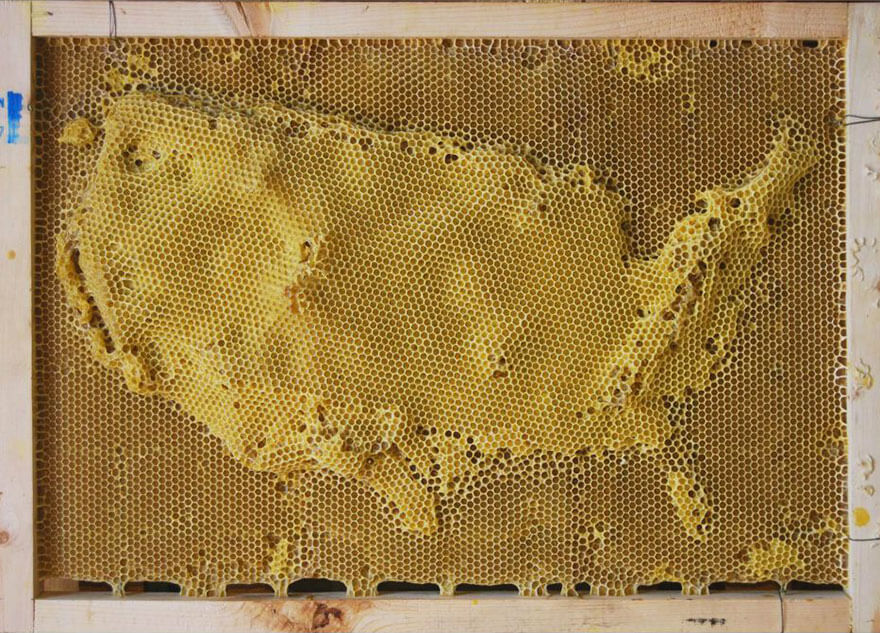 Ren Ri honeycomb sculptures made with the help of bees