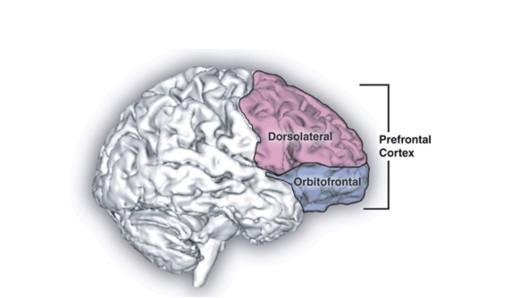 Prevent awkward conversations: The Neuroscience behind choking