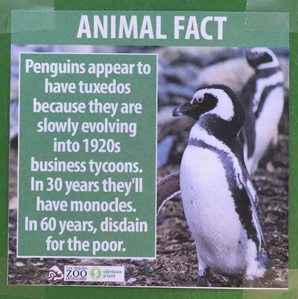 Penguins are evolving in 1920s business tycoons