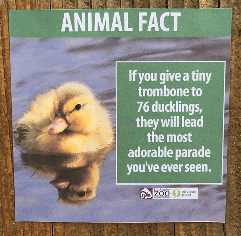 Duckling fake animal facts