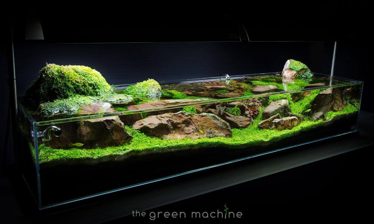 Discover The Art Of Aquarium Decorating Daniel Swanick Ziolite Dan Aquascape