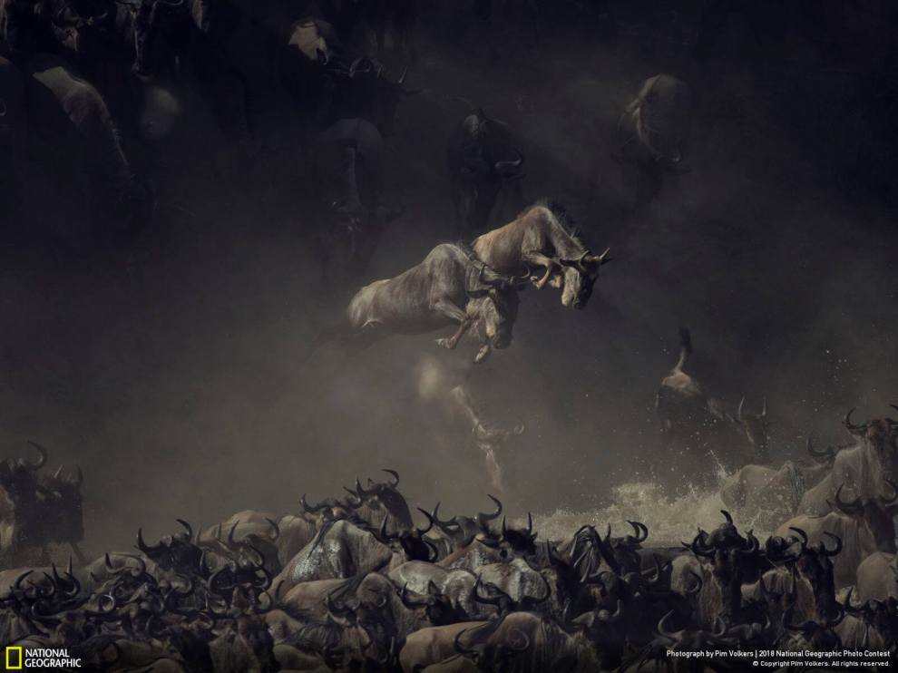 2018 National Geographic Photo Contest: 1st place wildlife category