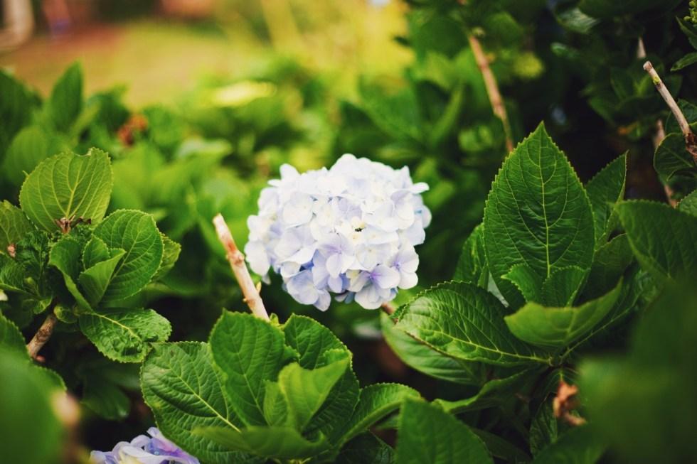 Rumi – 10 Lecţii Care îţi Pot Schimba Viaţa