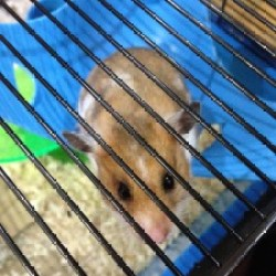 A report on the incident of the hamster in the wall