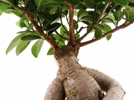 Beneficios de la raíz de ashwagandha como suplemento