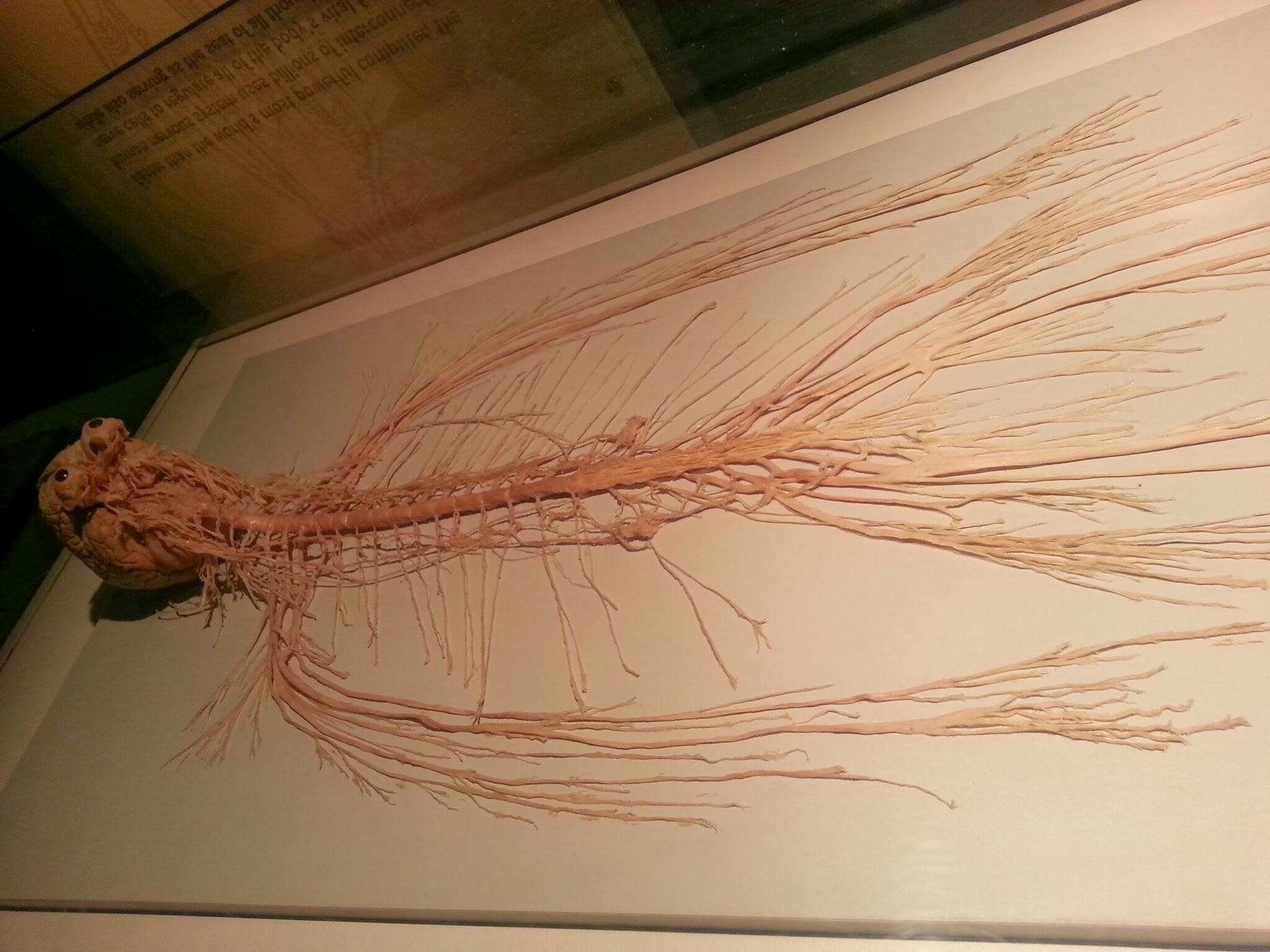 Nervous System Human Body Dani S Decadent Deals