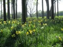 Palsgaard Forest