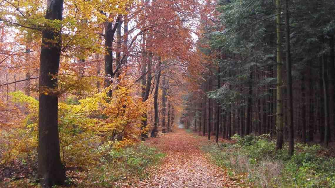 Gå en tur i skoven – mere end 24 aktiviteter til jul. Find inspiration til din jul, gratis print og opskrifter på danishthings.com.