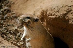 114 בעלי חיים, מצפה רמון, ישראל
