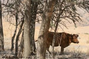 2214 בעלי חיים, הגליל התחתון, ישראל