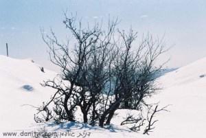 245 שלג, רמת הגולן, ישראל