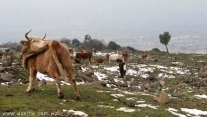 תמונות יפות למכירה צילום בעלי חיים, רמת הגולן, ישראל 2930