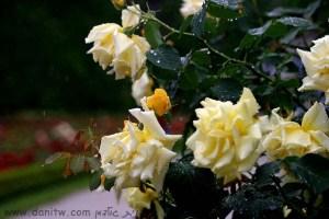 298 פרחים ועצים, אוסטרי
