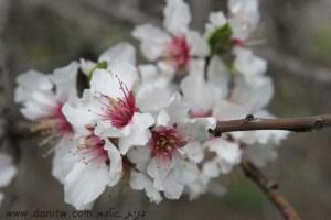 3040 פרחים ועצים, עמק יזרעאל, ישראל
