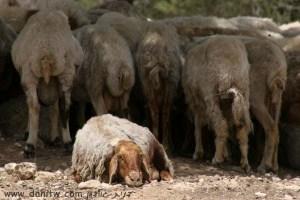תמונות יפות למכירה צילום בעלי חיים, יתיר, ישראל 3194