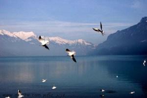 387 ימים ואגמים, שוויץ