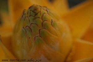 3956 פרחים ועצים, ראש פינה, ישראל