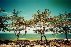 5190 פרחים ועצים, אקוודור