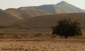 5222 מדבר, הרים, בקעת הירדן, ישראל