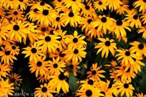 803 פרחים ועצים, שוויץ
