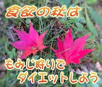 食欲の秋は紅葉狩りでダイエットしよう